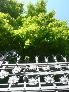Il cancello della Sede